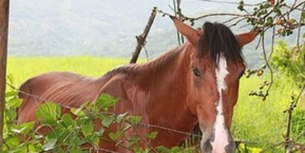 Justice for Abused Horses and Demand the Abuser Never Own Horses or Animals Again!!