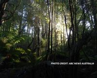 Save the Tarkine Rainforest!