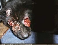Stop the Dog and Cat slaughter in China