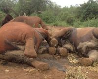 Stop the Slaughter of Innocent Elephants and Wildlife