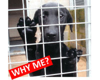 CONTROL UK DOG BREEDING NOW!