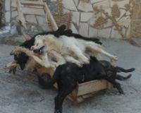 Stop the mass poisoning of dogs in Salamina