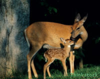 Stop the Deer Cull in the UK