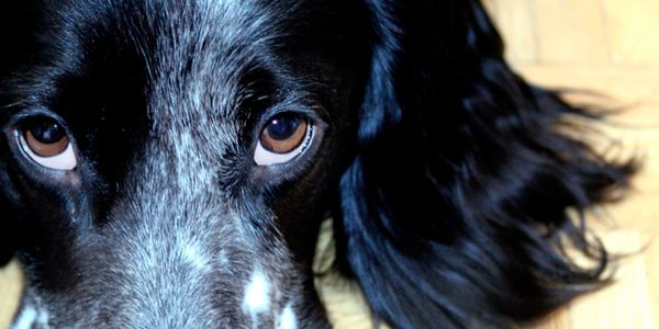 Ban electric shock dog collars in the UK