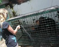 Free Johnny the Sun Bear
