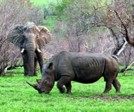 END RHINO AND ELEPHANT POACHING & HABITAT LOSS Support Wildlife Conservation Groups