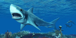 Save California's Great White Shark!