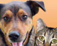 HELP ANIMALS, PET SHELTERS WITH CLICK