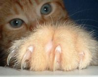 Tell Canada- Ban Cat Declawing