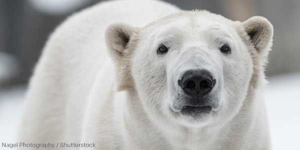 We Can End Arctic Drilling - For Good