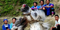 STOP Horse Fighting in Korea, China & Phillipines