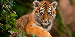 Save Wildlife and their Habitats from Deforestation!
