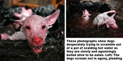 Stop CHINA from barbaric cruelty towards animals!