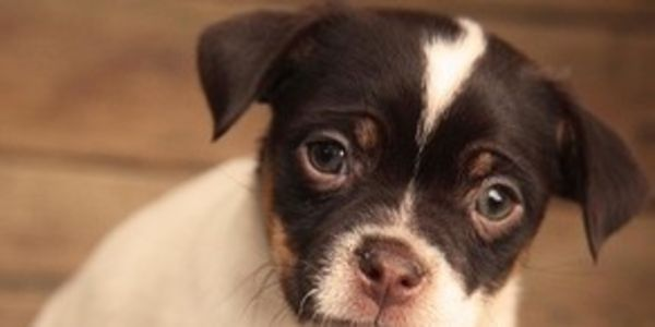 Ask for maximum penalties for man torturing and killing puppy in front of his child!