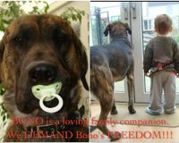 Save Bono From the Same Fate as Lennox!