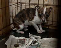 Urge Congress to Crack Down on Puppy Mills