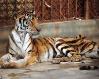 Close Tiger Farms in China