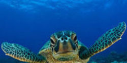 Pledge to Save a Turtle Hatchling