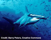 Fight The Shark Fin Trade