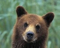 .Force Shutdown of Inhumane Bear Zoos