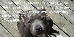 Stop the banning of pit bulls in the U.S.