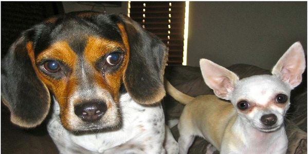 BAN the sale of Pets in Pet Stores in Las Vegas!
