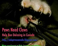 Ban De-clawing in Canada