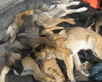 Stop the dogs killing called by the Church at Punta Arenas