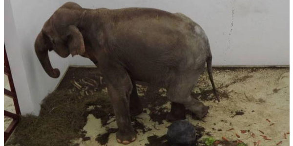 Help to get Tania out of the Targu Mures Zoo