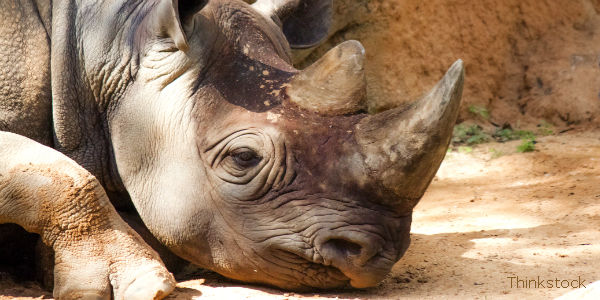 Stop South African Mine That Threatens Rhino Sanctuary