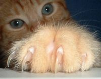 U.S.- Ban the Declawing of Cats