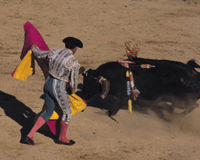 Walki byków w Meksyku Ban