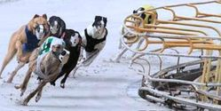 Close Down Greyhound Kennel after Two Deaths & Many Illnesses of their Dogs!!