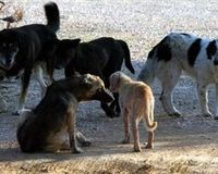 Help Stray Animals in Greece!!