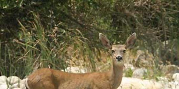 Uphold the Ban on Hunting in the San Diego National Wildlife Refuge