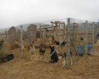 Maltrato que ocurre en Caldera, III Region, Chile