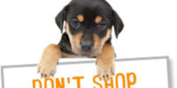 Pledge Not to Shop at Pet Stores That Sell Puppies