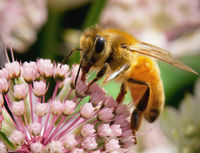 Ban Pesticide Killing Honey Bees