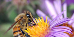 BAN the Pesticide Killing Honey Bees