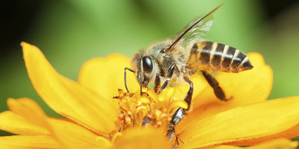 Tell the EPA to Restrict the Use of Deadly Neonicotinoids