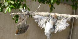 Demand an End to Bird Slaughter in Cyprus