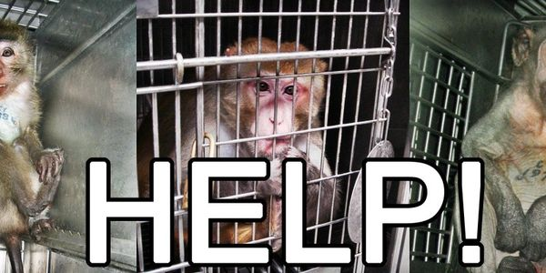 Please Share to Save Monkeys