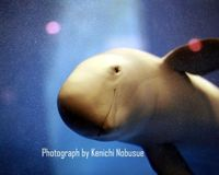 China - Don't Let the Freshwater Porpoise Disappear
