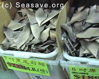 Help Make Shark Fin Possession Illegal in California