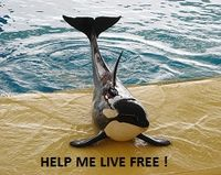 Free Morgan from Loro Parque