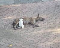 Stop the Poisoning of Stray Dogs