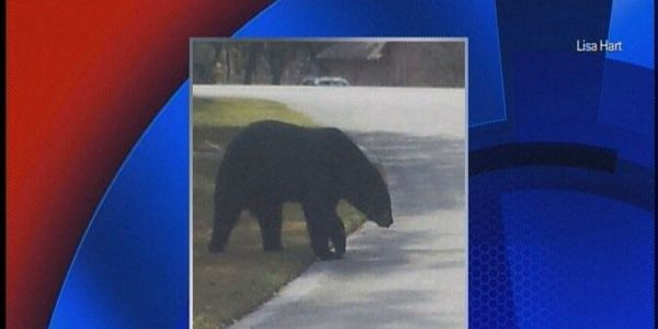 SEVEN (and counting) WILD BEARS KILLED BY FLORIDA FISH & WILDLIFE OFFICERS