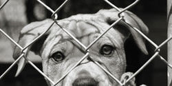 Convert high kill animal shelters into no-kill shelters!