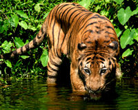 Save Endangered Species in Malaysia from Unnecessary Logging!