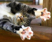 Ban Declawing in the United States